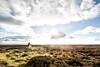 Reaching The Peak (jamesromanl17) Tags: dramaticsky horizon moodysky hill landscape sun peak ascent mountain mountains sky skies clouds cloud cloudscape cloudy yorkshire moor moors nationalpark england britain uk countryside shadow shadows light sunlight top climb