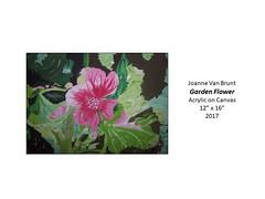 "Garden Flower • <a style=""font-size:0.8em;"" href=""https://www.flickr.com/photos/124378531@N04/40837894300/"" target=""_blank"">View on Flickr</a>"