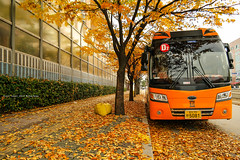color of autumn (gwnam.2008) Tags: city autumn road roadside sidewalk foliage fallfoliage leaf leaves orangecolor fallenleaves urbannature bus 송파구 석촌동 jamsil 잠실 seoul southkorea korea