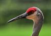06-13-18-0022367 (Lake Worth) Tags: animal animals bird birds birdwatcher everglades southflorida feathers florida nature outdoor outdoors waterbirds wetlands wildlife wings
