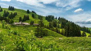 La verte Gruyère (Switzwerland)