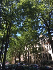 Cathedral of trees, row houses on 25th Street NW, Washington, D.C. (Paul McClure DC) Tags: washingtondc districtofcolumbia june2018 tree westend historic architecture
