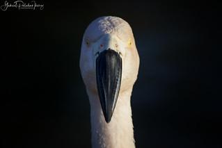 Mr. Big Beak