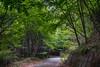 Fresh green road (shinichiro*) Tags: 20180520sdim3020hdr 2018 crazyshin sigmasdquattroh sdqh sigma1770mmf284dcmacrohsm japan spring may 河口湖 母の白滝 yamanashi jp nik hdr 41495699345 candidate