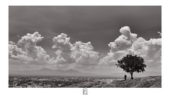 In Shade (krishartsphotography) Tags: krishnansrinivasan krishnan srinivasan krish arts photography fineart fine art monochrome tree shade people standing hill fort clouds sky city cityscape nature dindigul view affinity photo silverefxpro tamilnadu india