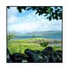 a tree! • mull, scotland • 2017 (lem's) Tags: tree lanscape paysage ile islnad mull arbre scotland ecosse alba zenza bronica