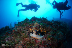 Polpo (2uc4 4bb4t3) Tags: silhouette sagome octopus polpo bubbleloungediving fisheye blu blue grottadeigamberi diving underwater dive lucaabbate sea mediterraneansea scuba ampportofino abyss ocean animal mare sub 2uc44bb4t3 d7000 nikon hugyfot 水肺 水肺潛水 скуба дайвинг
