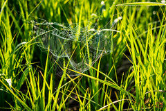 24-Ragged Web (Mitymous) Tags: doorcreekpark morning spiderwebs spring2018 walk