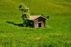 Lonesome log cabin (echumachenco) Tags: wood log hut roof plant holunder grass meadow green may spring oberjettenberg berchtesgadenerland berchtesgadeneralpen outdoor bavaria bayern germany deutschland nikond3100 tree field cabin