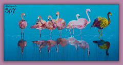 flamingos (Greg Rohan) Tags: flamingos flamingo bondibeach bondi sydney d750 aerosolart paintedstreetwalls paintedstreetart streetart artwork artist art arte urbanwalls urbanart urban 2018 nikon nikkor birds bird water reflection