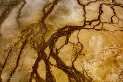 Earth ... from space (mariola aga) Tags: yellowstonenationalpark wyoming midwaygeyserbasin microbialmat closeup abstract nature thegalaxy
