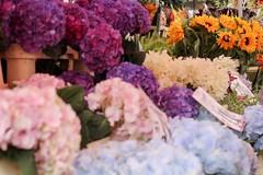 Columbia Market (soleneelle) Tags: flower poppies sunflower columbia market hortensia pub
