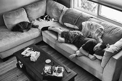 Sunday Snooze (flashfix) Tags: june102018 2018inphotos ottawa ontario canada nikond7100 28mm portrait man scott couch nap siesta lazy sleeping dreamers kittynose fyero nebelung ragamuffin ragdoll fluffy graycat familyportrait blackandwhite monochrome