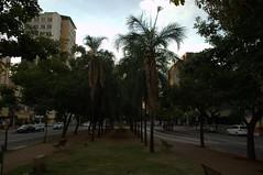 DSC_0757 (Proflázaro) Tags: viagem goiás cidade goiânia jardim palmeira arquitetura engenharia calçada banco bancodepraça gramado natureza nikond3100 brasil ecologia canteiro