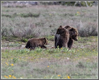 Grizzly Games 0173
