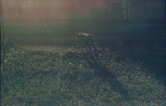 (Lolita Storm) Tags: error film analog