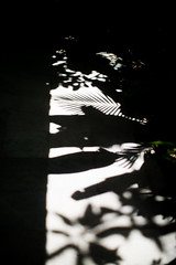 sometimes less is more.. (paul.wienerroither) Tags: natureshots nature light lightanddark shadow shadows plants minimalism bali indonesia travel getoutside exploremore photography canon 50mm 5dmk3 lessismore focus beautiful