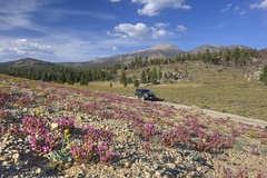 Trip to the high country (Chief Bwana) Tags: ca california sierranevada southernsierra monachemeadows 4runner wildflowers olanchapeak 4x4 psa104 chiefbwana