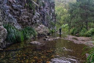Green Gully Track: through the creek