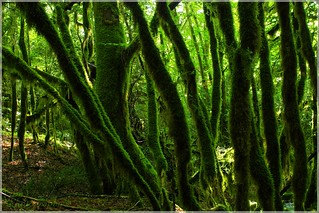 The Greenest Forest
