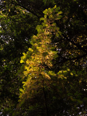 Branch Out (DAWPhotog) Tags: trees leaf branch light sunset sunny sunlight summer spring evening naturallight forest woodland colours green orange lickeyhills travel adventure landscpae landscape scenic abstract nature beautiful