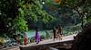 DSC_2639 (rajashekarhk) Tags: morningwalkers lalbhag botanicalgarden green beauty bengaluru karnataka l lalbagh southindia nikon nature lake lotuspond red tree gardencity rajashekar hk hkr healthcare