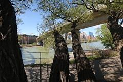 A walk around town (davebloggs007) Tags: calgary alberta canada bow river