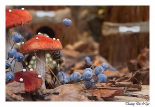 Champignon de velours / Velvet mushroom