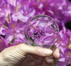 Crystal ball (kimcull) Tags: crystalball purple flowers rhododendron reflections hands