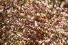 "fine art stack of 9 focus points to show off gorgeous broom in the bright sunshine, a Potterton garden, Aberdeenshire, Scotland (grumpybaldprof) Tags: flower sun contrast garden flowers promise colours bud stem green elegance beauty light texture plant petals petal floral sheen veins intensity vibrancy shape leaf flora striking brilliance shadow hairs macro stack dof ""multiplefocuspoints"" ""depthoffield"" detail details ""detailsoflife"" ""depthoffieldstacking"" fineart stacking blending ""apottertongarden"" potterton aberdeenshire scotland broom genisteae lupine lupin gorse laburnbum ""fineart"" ethereal artistic interpretation impressionist stylistic style bright dark black white illuminated canon 7d ""canon7d"" 100 100mm f28 ""isusm"" ""canonef100mmf28lmacroisusm"""