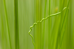 Beautiful difference (Barrie T) Tags: macro home garden potofgrass green lines shapes grass