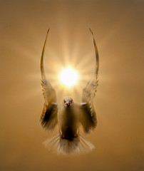 My Guardian Angel (adrians_art) Tags: blackheadedgulls sunburst birds flight wings silhouettes angelic shadows feathers sky clouds wildlife seabirds nature gold orange yellow red blackandwhite