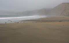 Drakes Beach (Cathy de Moll) Tags: beach sand fog mist seagulls lonely empty cliffs california gray mysterious shoreline vista