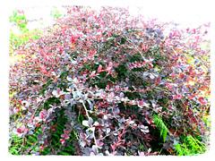 Ramas multicolores (Los colores del Barbanza) Tags: arbustos ramas colores parque de san roque ribeira barbanza coruña galicia españa spain
