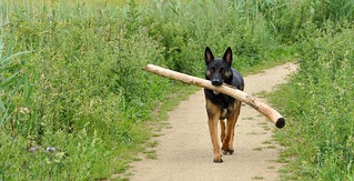 Out of the way, and stay away from my stick !!!!!!