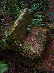 Nature prevails (Rick Elkins) Tags: woods forest fern mushroom bench wood reclaim nature overgrown rainforest growth canada vancouverisland leaves dirt green lush wet decay regeneration
