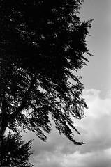 Himmel - Skies (JSasarman) Tags: 11 35mm 400 400tx d76 kodak ls600 leica leicam m6 messucher noritsu summicron trix asph himmel rangefinder sky strasse strase street
