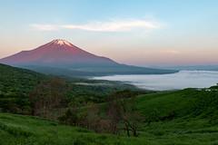Fuji in the morning sun (shinichiro*) Tags: 南都留郡 山梨県 日本 jp 20180605ds53438 2018 crazyshin nikond4s afsnikkor2470mmf28ged june summer fuji lakeyamanaka yamanashi japan 42591503732 candidate