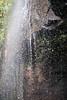 Australia_2018-180.jpg (emmachachere) Tags: subtropical trees hike waterfall boatride springbrook australia rainforest kanagroo animals koala brisbane boat lonepinekoalasanctuary