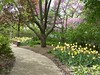 Lombard, IL, Lilacia Park, Red Bud Trees and Yellow Tulips (Mary Warren 10.7+ Million Views) Tags: lombardil lilaciapark park garden nature flora plants blooms blossoms flowers spring trees redbud pink path trrail pavers stone yellow tulips