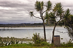 Windy day (jkotrub) Tags: tree trees newzealand travel explore water wind windy river waterfall