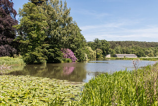 Ornamental Lake beside the grounds of Waverley Abbey