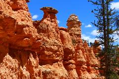 IMG_2067 (Ichiban7too) Tags: bryce national park canyon utah nature hoodoo red sandstone