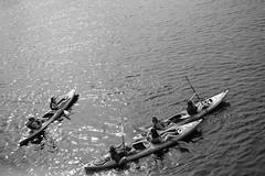 kayaking (jenny_guo) Tags: boston cambridge outdoor monochrome blackandwhite water light people xpro2 x carlzeiss zeiss touit1832 sports