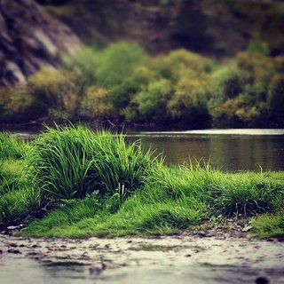 Cold Waters of the Pyshma River #urals #russia #river #pyshma #green #riverbank #water #canon_eos_77d #ef50mmf18stm