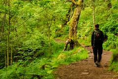 Padley Gorge selfie (DRWeaver) Tags: woodland trees summer landscape nature nationaltrust derbyshire outdoors peakdistrict longshaw padleygorge derbyshiredalesdistrict england unitedkingdom gb
