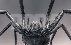 BritishIronWorksCentre07.05.17 39 (Mantle Imagery) Tags: british ironwork museum cars automotive photography bmw porsche ford focus fiesta mitsubishi audi subaru lamborghini miami blue aventadorsv ironspider alien xenomorph escort mazda westfield