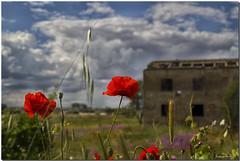 ZAMORA, LA BELLEZA DE LO ANTIGUO (Lorenmart) Tags: amapolas bn ruinas lorenmart flores flowers primavera nubes texturas nwn canoneos550d zamora castillayleon españa spain espigas capullos