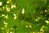 BLEU PLUS JAUNE (Louise Lemettais) Tags: green power leaves leaf tree wood forest summer spring love macro details canon louise lemettais nature wild wilder sweety peace good