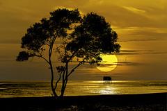 004 (Ảnh của Nam) Tags: ngượcsáng mặttrời biển việtnam phongcảnh landscape màucam
